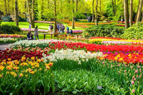 flowers_in_keukenhof_gardens_netherlands