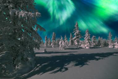 Aurora Borealis over snow covered forest